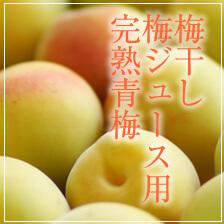 完熟青梅(梅干し・梅ジュース用)